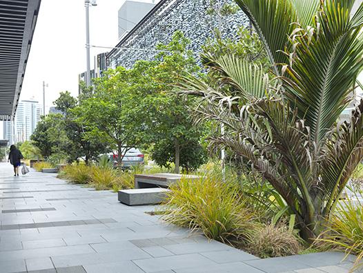 Rain Garden Mix Auckland
