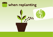 Top up with fresh potting mix when re-planting.